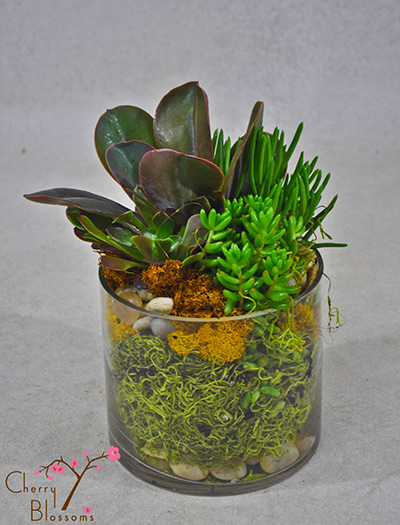 succulent dish garden succulent dish garden item id pl 48 your price
