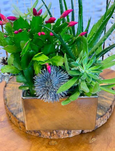 Christmas Succulent Planters.Christmas Cactus Planter Cherry Blossoms Florist Westminster Co