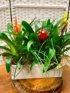 Bromeliad Tropical Garden