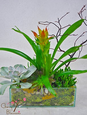 Succulents Rectangular